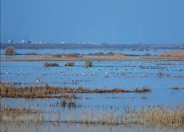GATOR PUMP Supports the Sustainment of Wetlands